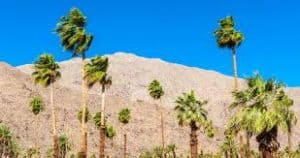 Barren Mountainside Dotted with Palms in the Coachella Valley