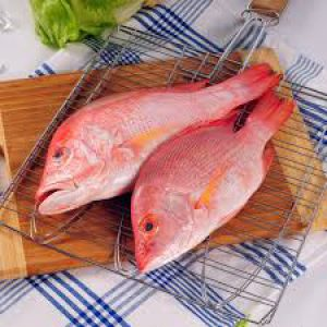 Two Red Snapper